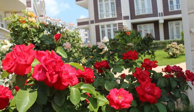 gardenia43